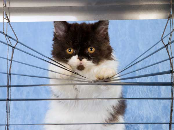 cat-through-blinds