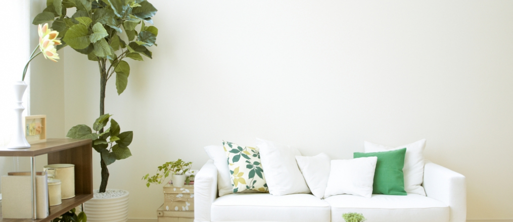 Living room interior with green plant and cushions