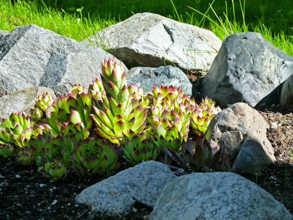 4 1024x768 Low maintenance garden landscaping