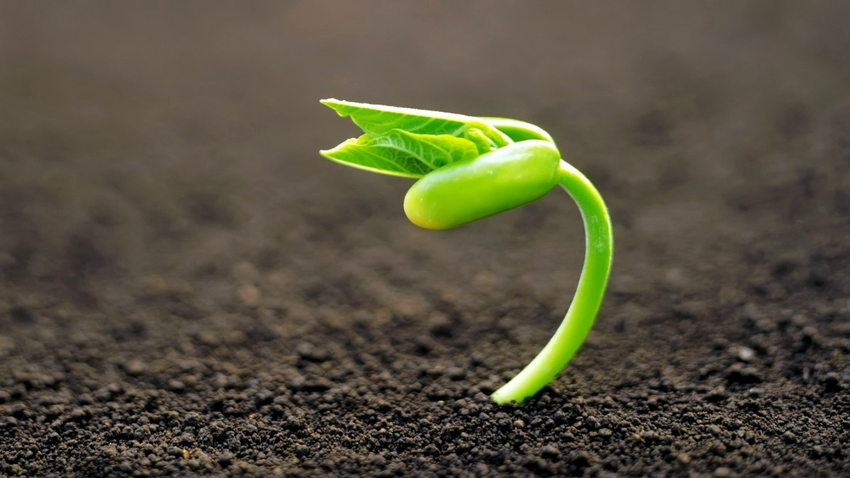 Growing-Flower