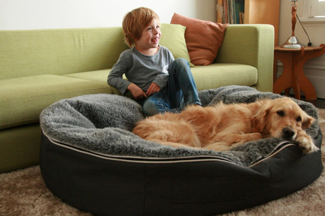Relaxing Bean Bags For Dogs
